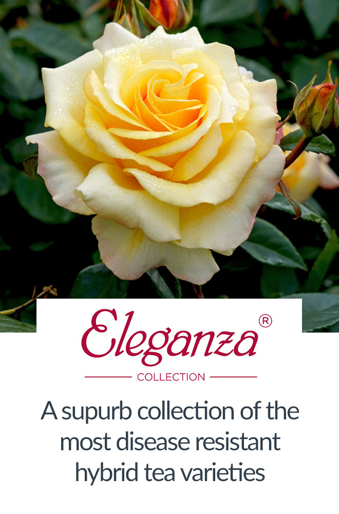 View Eleganza Collection