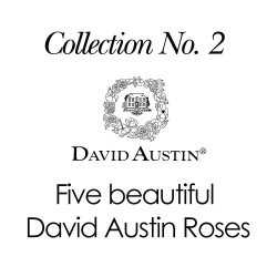 2019 Collection No. 2 - David Austin Roses