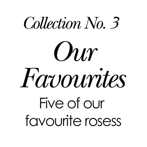 2019 Collection No. 3 - Our Favourite Roses